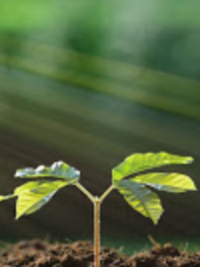 Profileimage by Anonymous profile, Environmental & Sustainability  Consulting